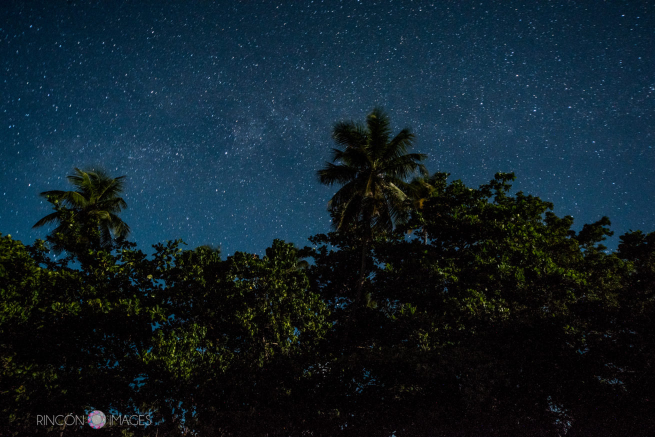 astral photography of palm tress and night sky